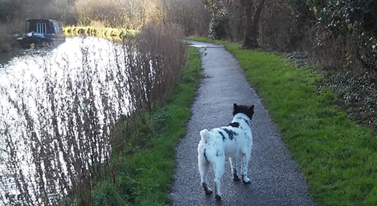Dog walking Wiltshire canal path